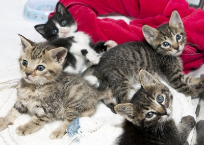 Our Kitten Nursery is open seasonally and saves hundreds of lives