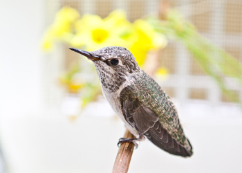 Photo of Humming Bird - Job Opportunities at PHS/SPCA