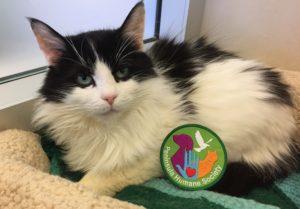 Cookie - Scout Compassion Program Badge