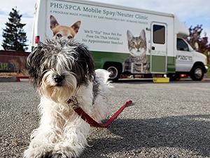 San Francisco Bay Humane Friends Peninsula Humane Society Spca