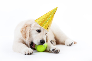 Puppy with Party Hat