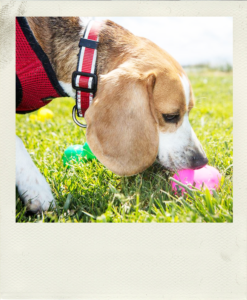Wag's Easter Egg Hunt for Dogs! @ Redwood City