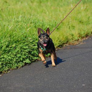 Bark and Lunge Club @ Peninsula Humane Society & SPCA