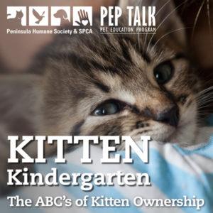 PEP Talk Kitten Kindergarten @ Lantos Center for Compassion