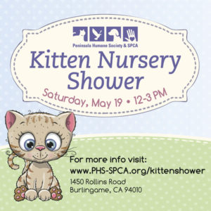 Kitten Nursery Shower @ Center for Compassion | Burlingame | California | United States