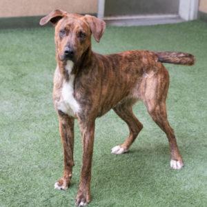 Companion Dog Level 1 @ Peninsula Humane Society & SPCA