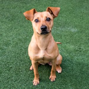 Beginner Puppy Class @ Peninsula Humane Society & SPCA