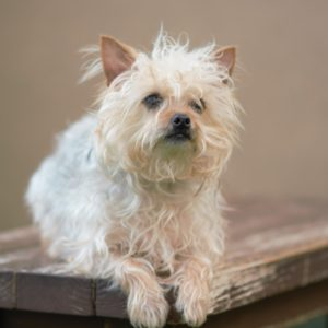 Companion Dog Level 1 Class @ Peninsula Humane Society & SPCA